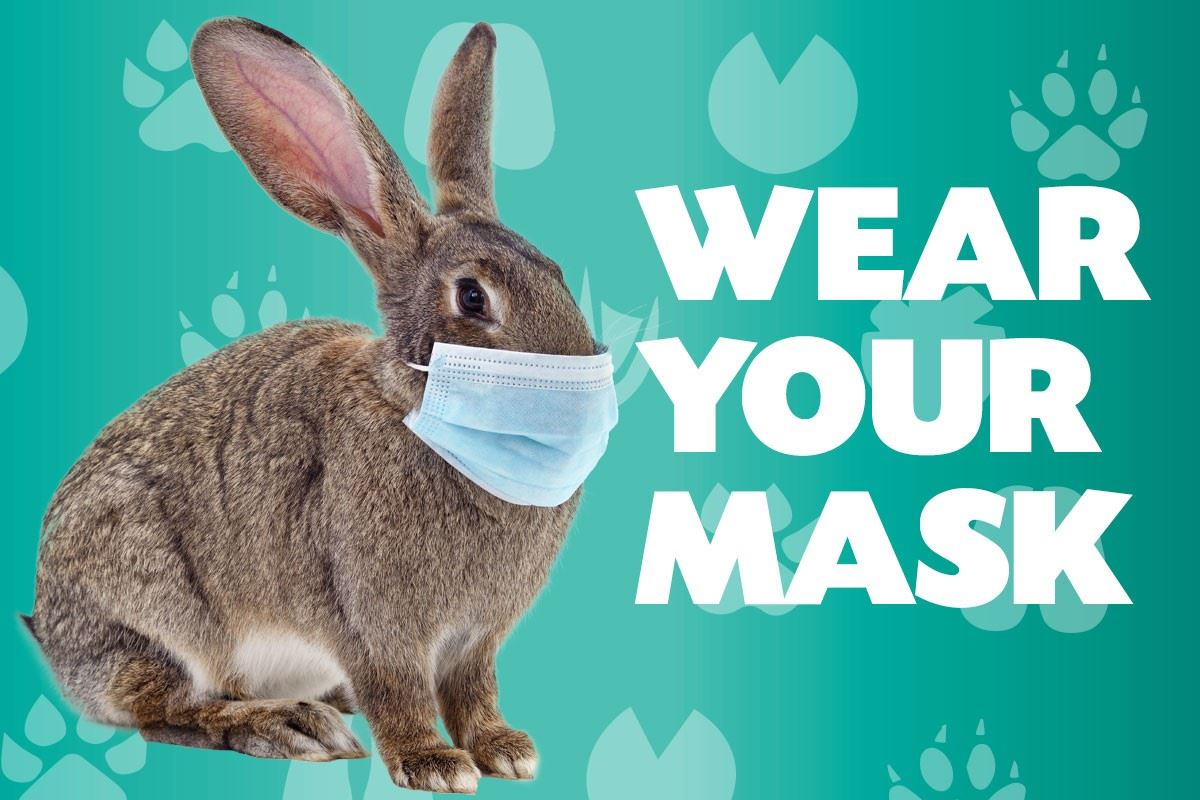 bunny wear your mask